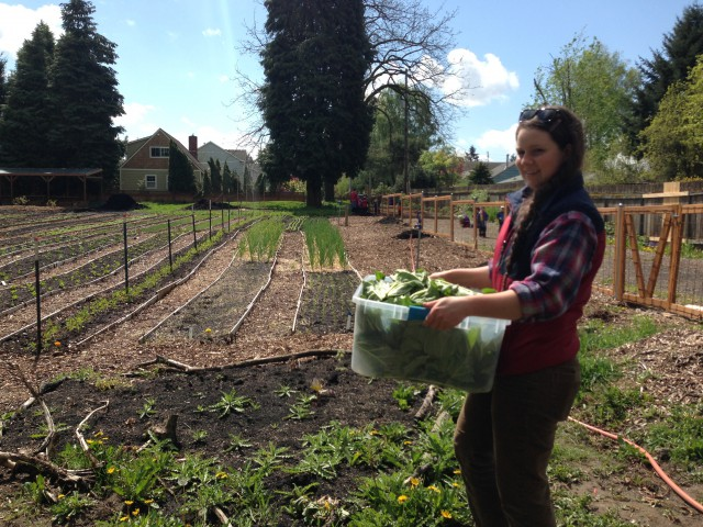 Side Yard Farm & Kitchen - Lacey