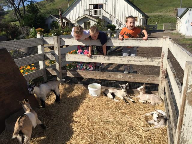 Harley Goat Farm Pescadero