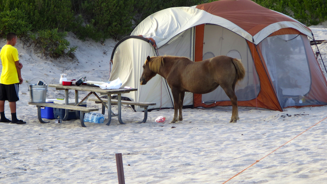 assateague_mrsgemstone_allkindscamping_camping_national_redtricycle