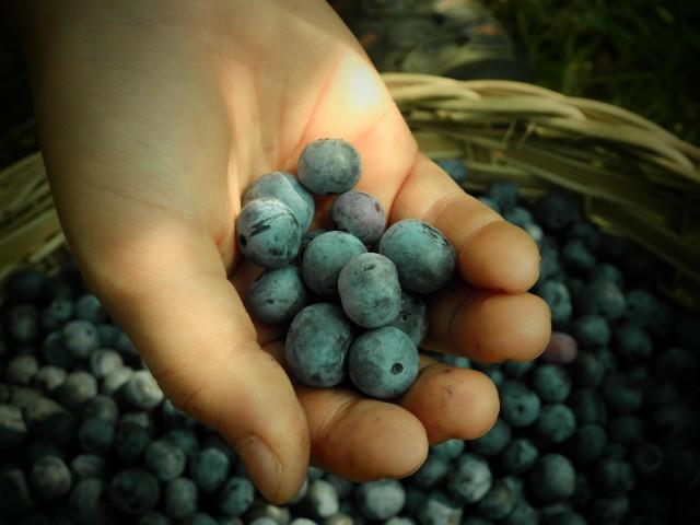 blueberries in kid's hand