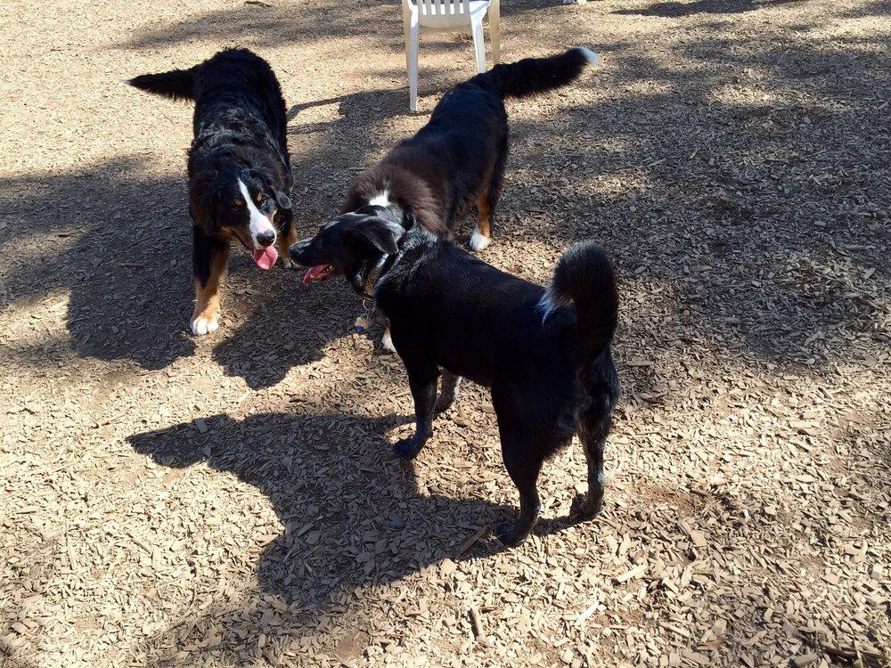 Happy Valley Dog Park