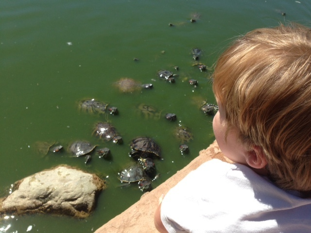 Diversión con tortugas en CSUN Pond