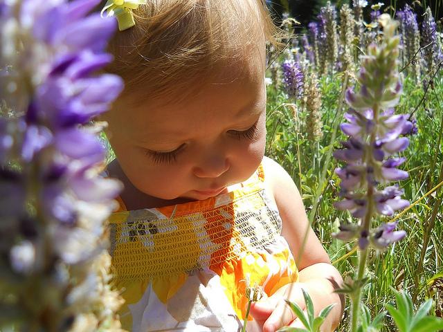 baby-wildflowers-flickr-cc-usfsregion5