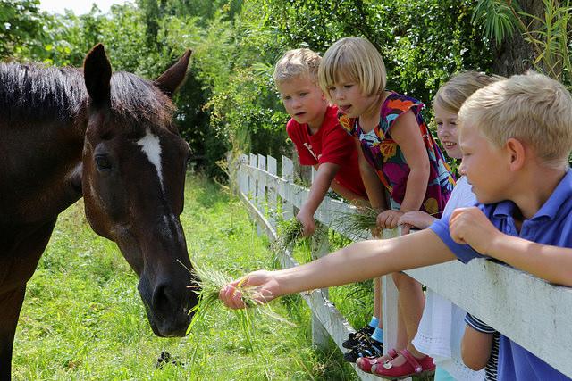 niños-caballos-flickr-cc-familjenhelsinborg