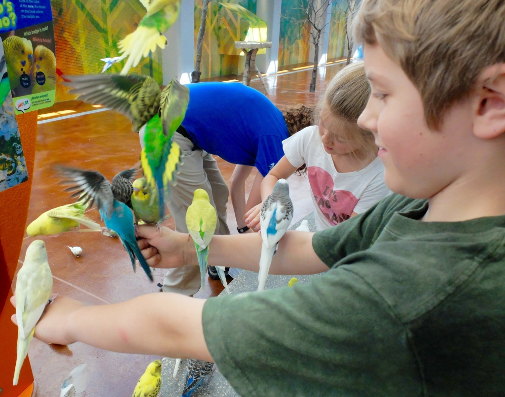 Brookfield Zoo Wild Encounters
