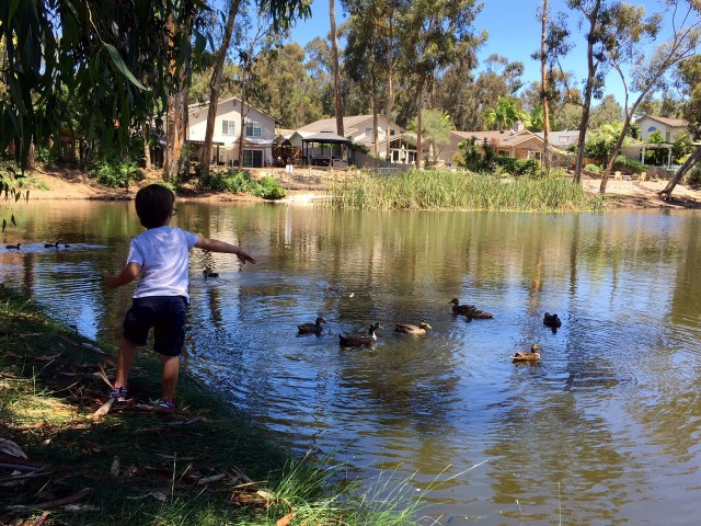 Hendrix Pond