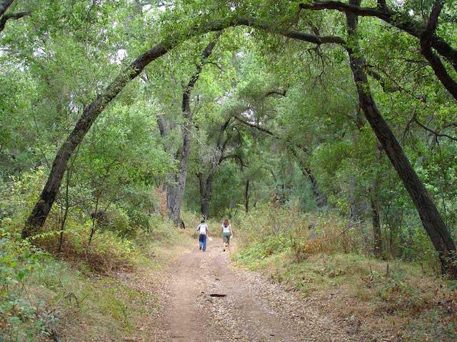 Ojai-Hiking-Pratt-Trail