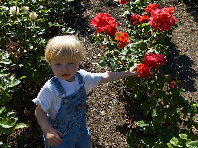 rose.garden.portland
