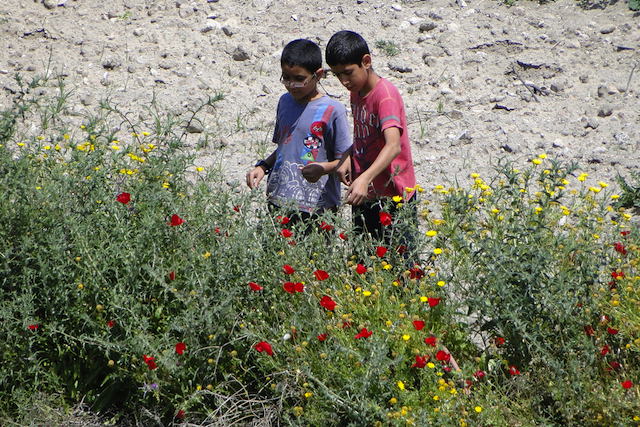 wildflowers_adamjonesflickr_hikinglist_hiking_national_redtricycle