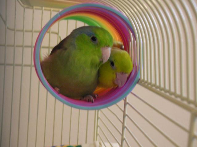 birds in a slinky
