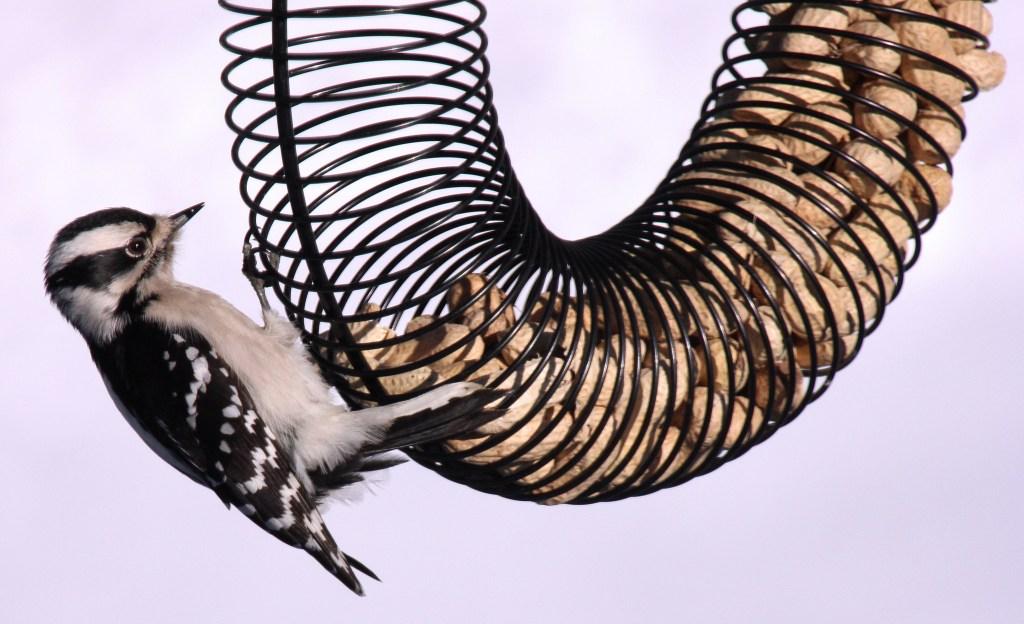 slinky bird feeder