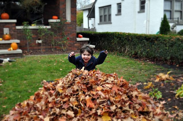 leavesjumping-cc-russ-flickr