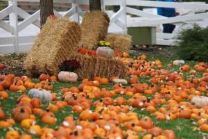 Lincoln Park Fall Fest