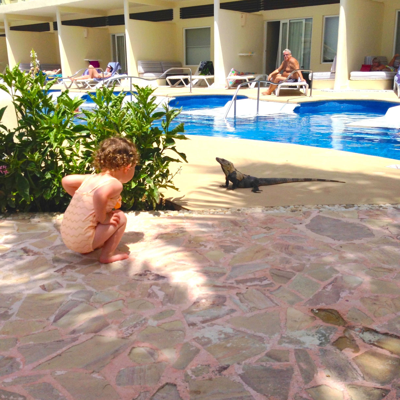 pool2_iguana