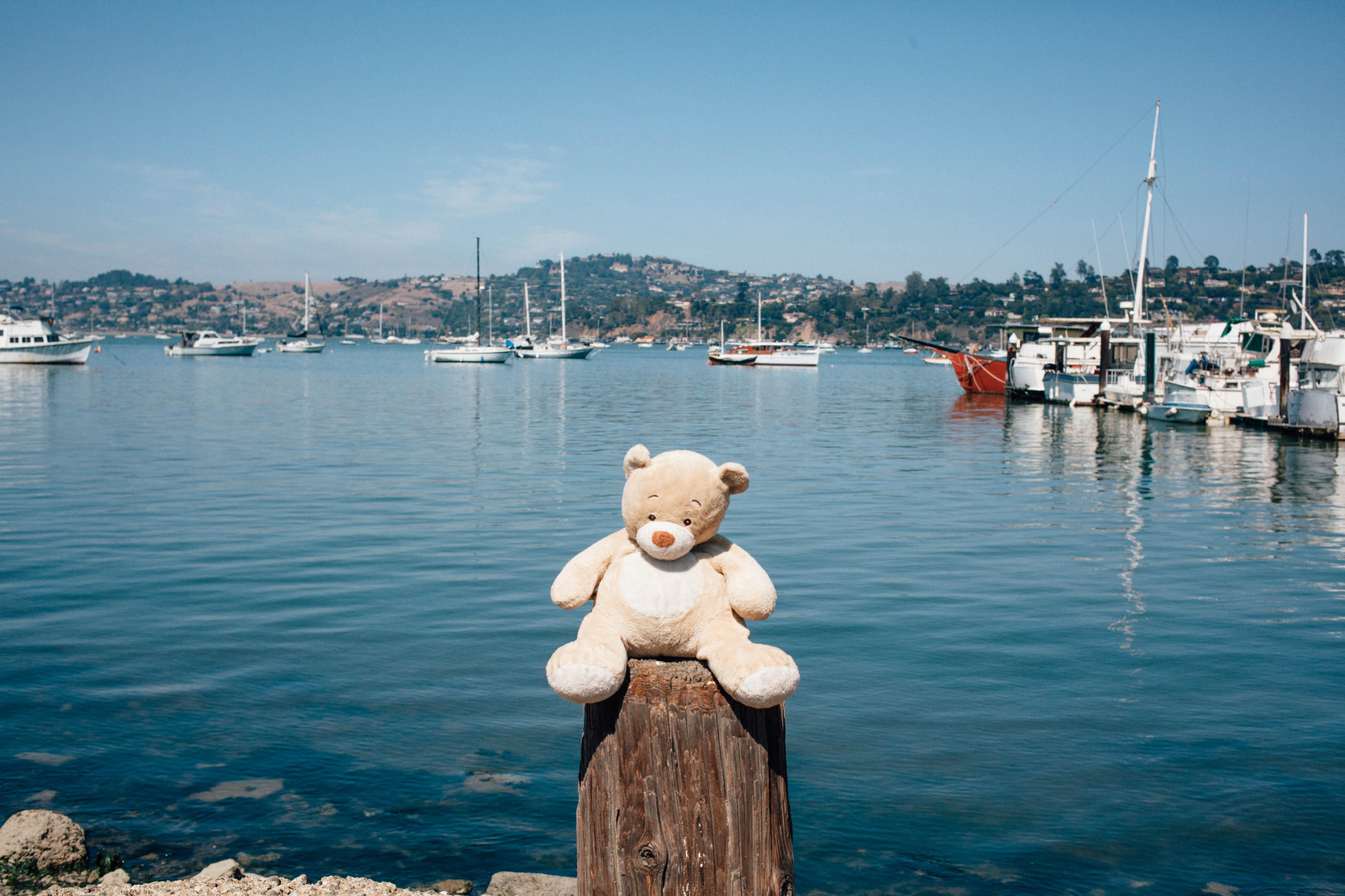 TeddyBear-10