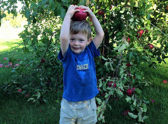 apple-picking-boy-crdt