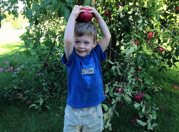 niño-recolector-de-manzanas-crdt