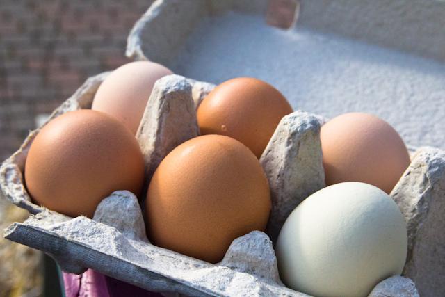 hard-boiled-egg-ccflickr-stevendepolo
