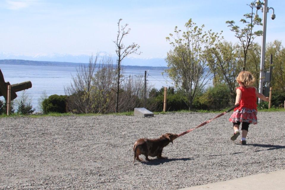 dog-pull-girl