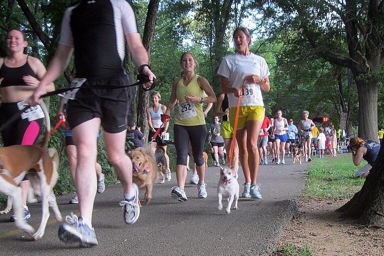 dog-jogging