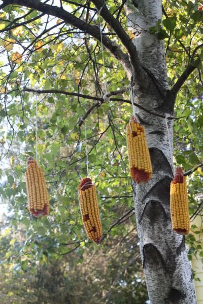 String-Corn-Squirrel-Feeder