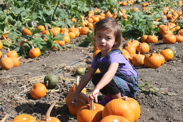 Toddler Activities Underwood Farms