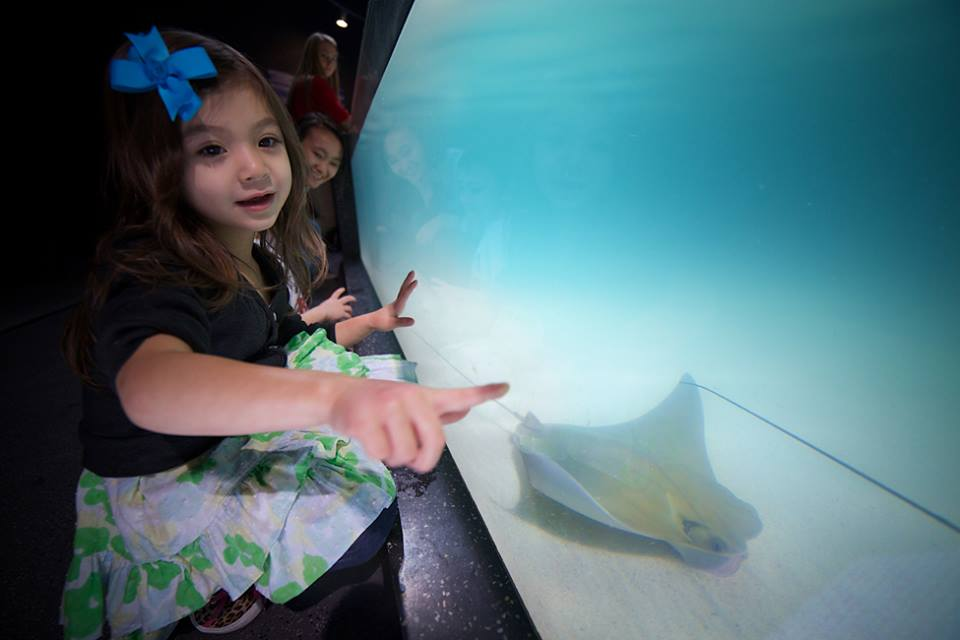 virginia-beach-aquarium