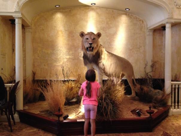 Clifton's Lion