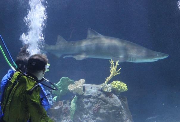 shark-divers-aquarium