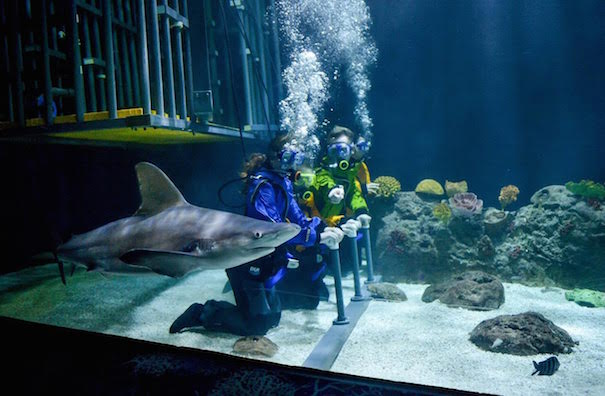 sharks-beyond-the-cage