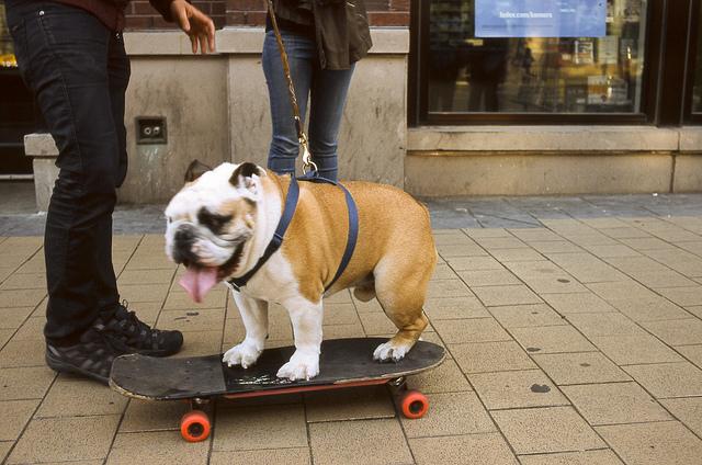 perro en una patineta