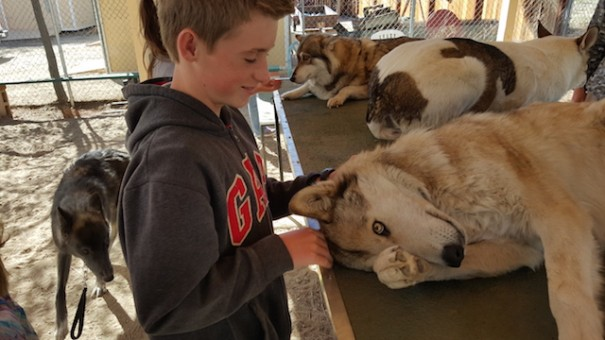boy-petting-wolf-shadowland-foundation