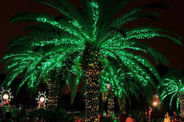 palm lights flickr