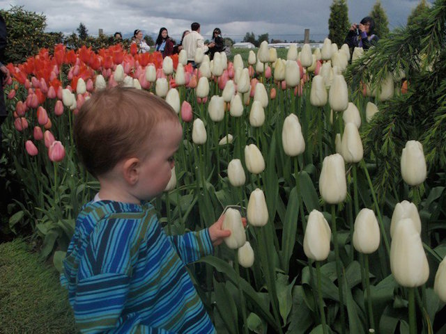 baby boy and tulip festival seattle