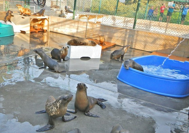 The temporary habitats for rescued marine mammals in San Pedro, CA