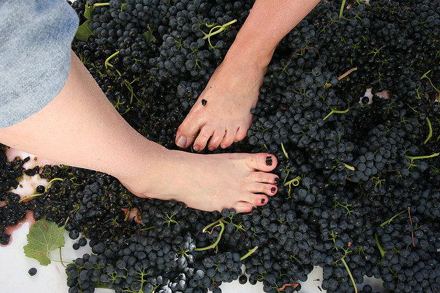 grape-stomping-ccflickr-fall-line