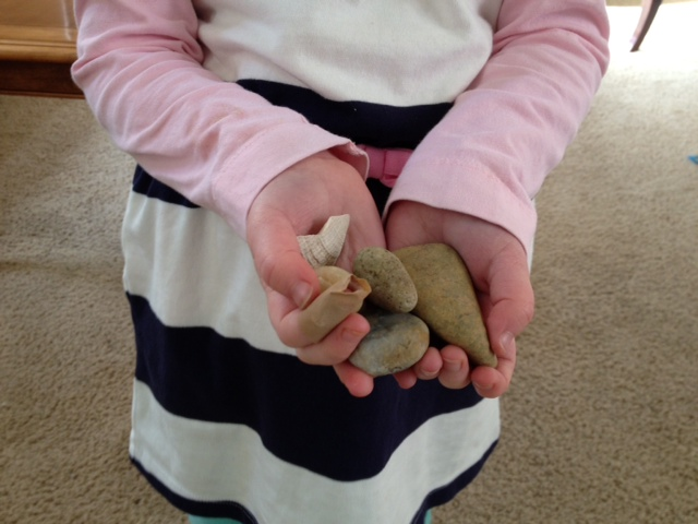 rocks and shells in hand