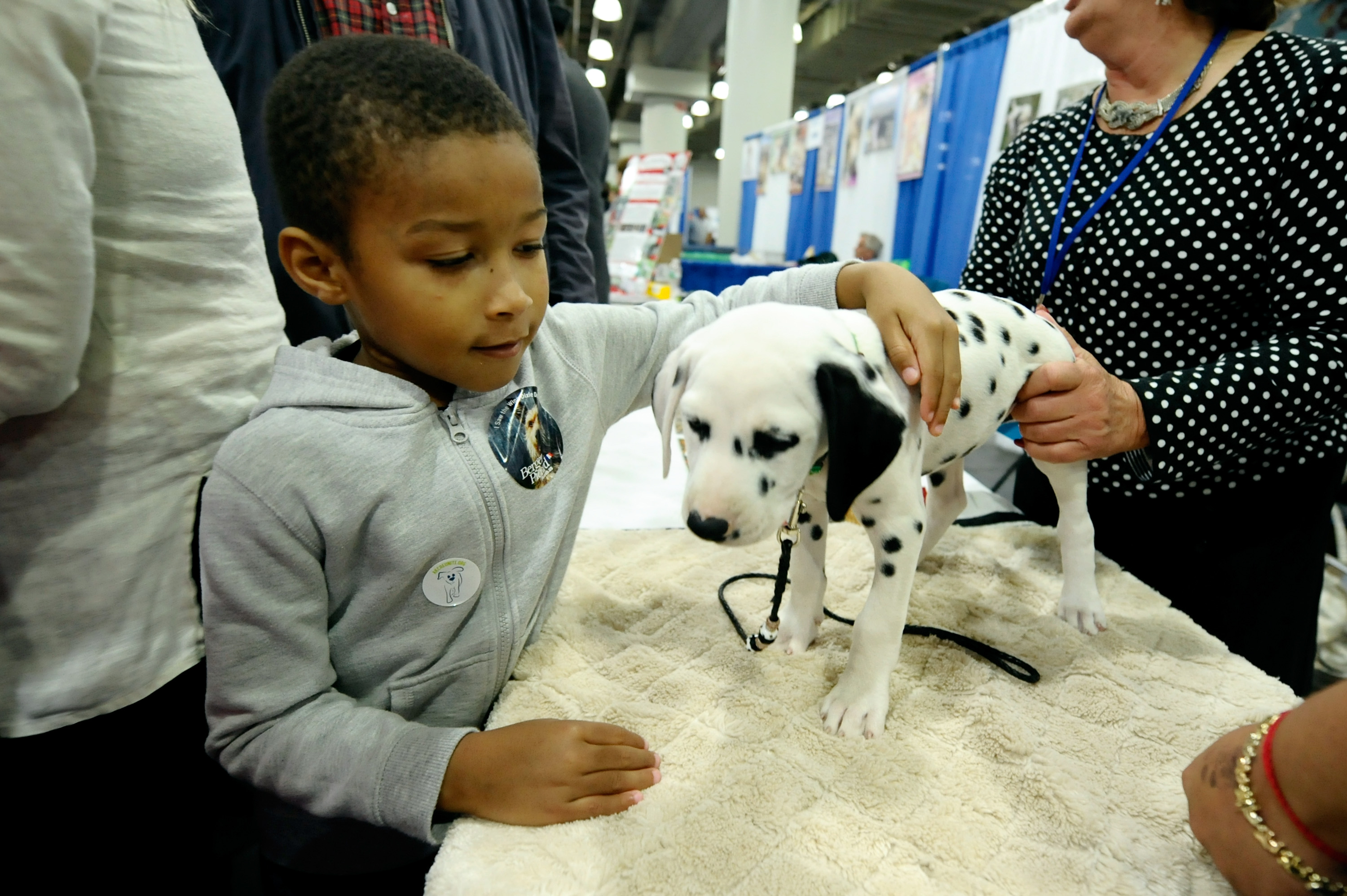"""NEW YORK, NY - SEPTEMBER 28: A view of atmosphere at Day 1 of AKC """"Meet The Breeds"""" showcase at Jacob Javits Center on September 28, 2013 in New York City. (Photo by Ilya S. Savenok/Getty Images for American Kennel Club)"""