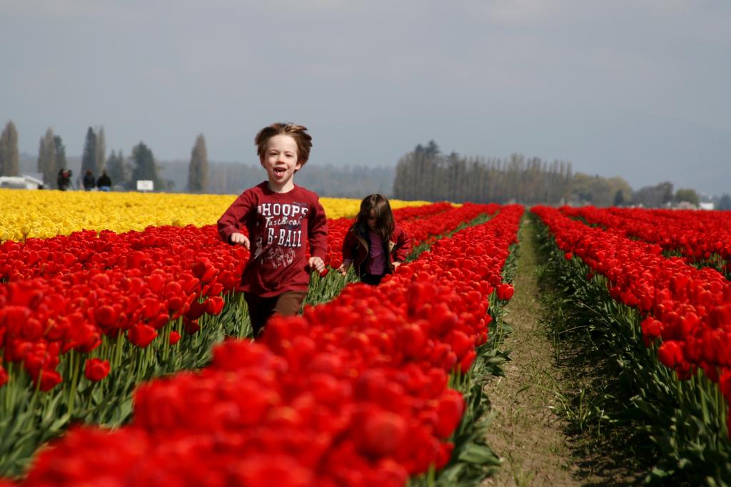 CRDT-kidsnature, tulip fields
