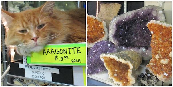 rockhound-jerry's-shop-cat