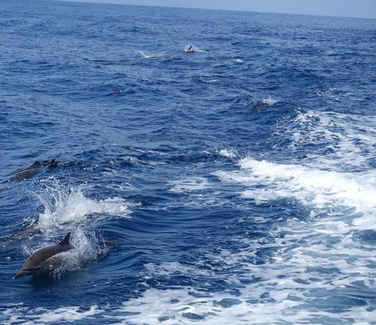 RTWylandlotsofdolphins