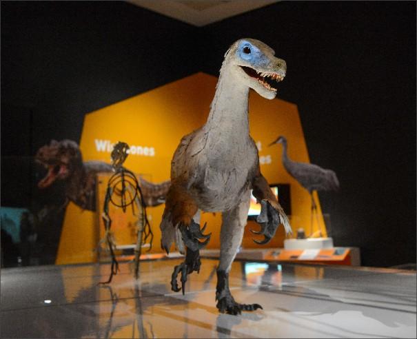 21. Velociraptor_RM_160310_1215