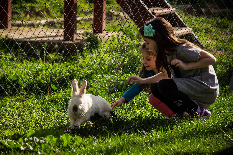 CRDT-kidseaster-28, outdoors, petting, bunnies
