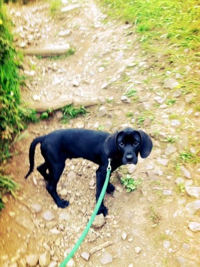 Murphy-puppy