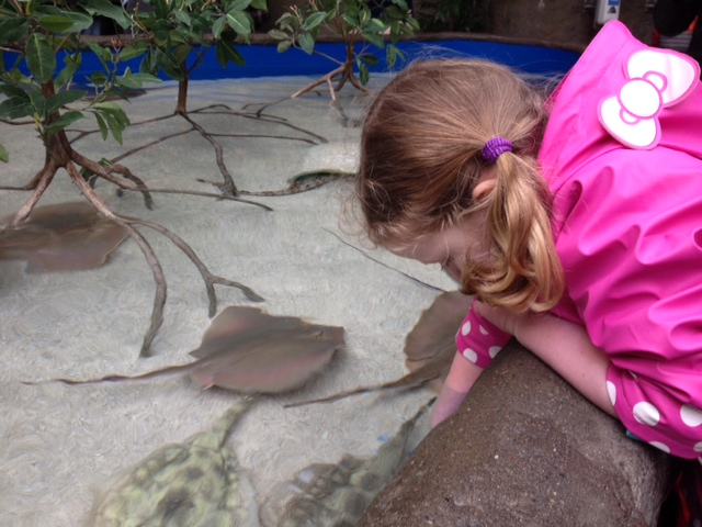 Point Def Zoo girl petting sting ray