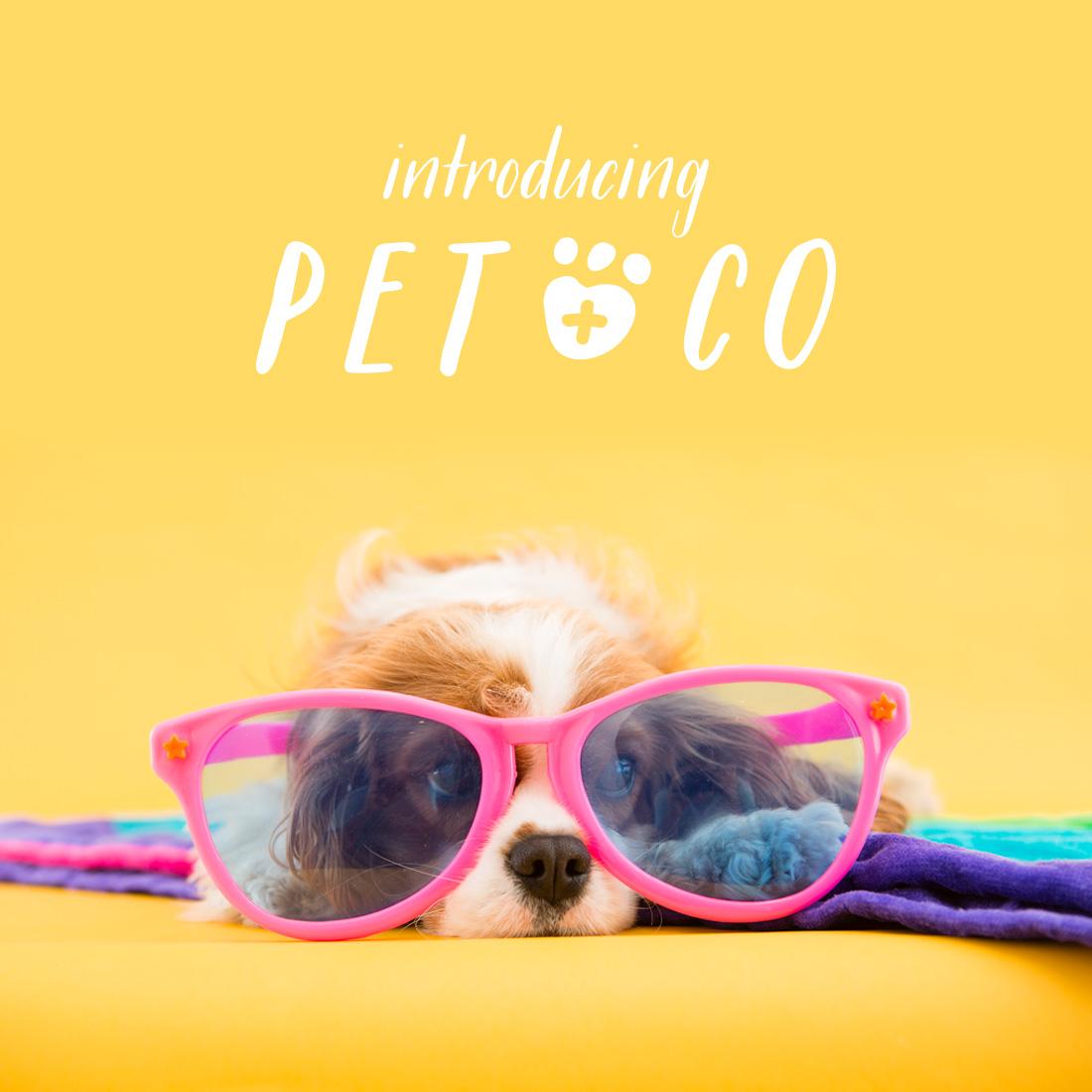 petandco-annouce-1100x1100-01