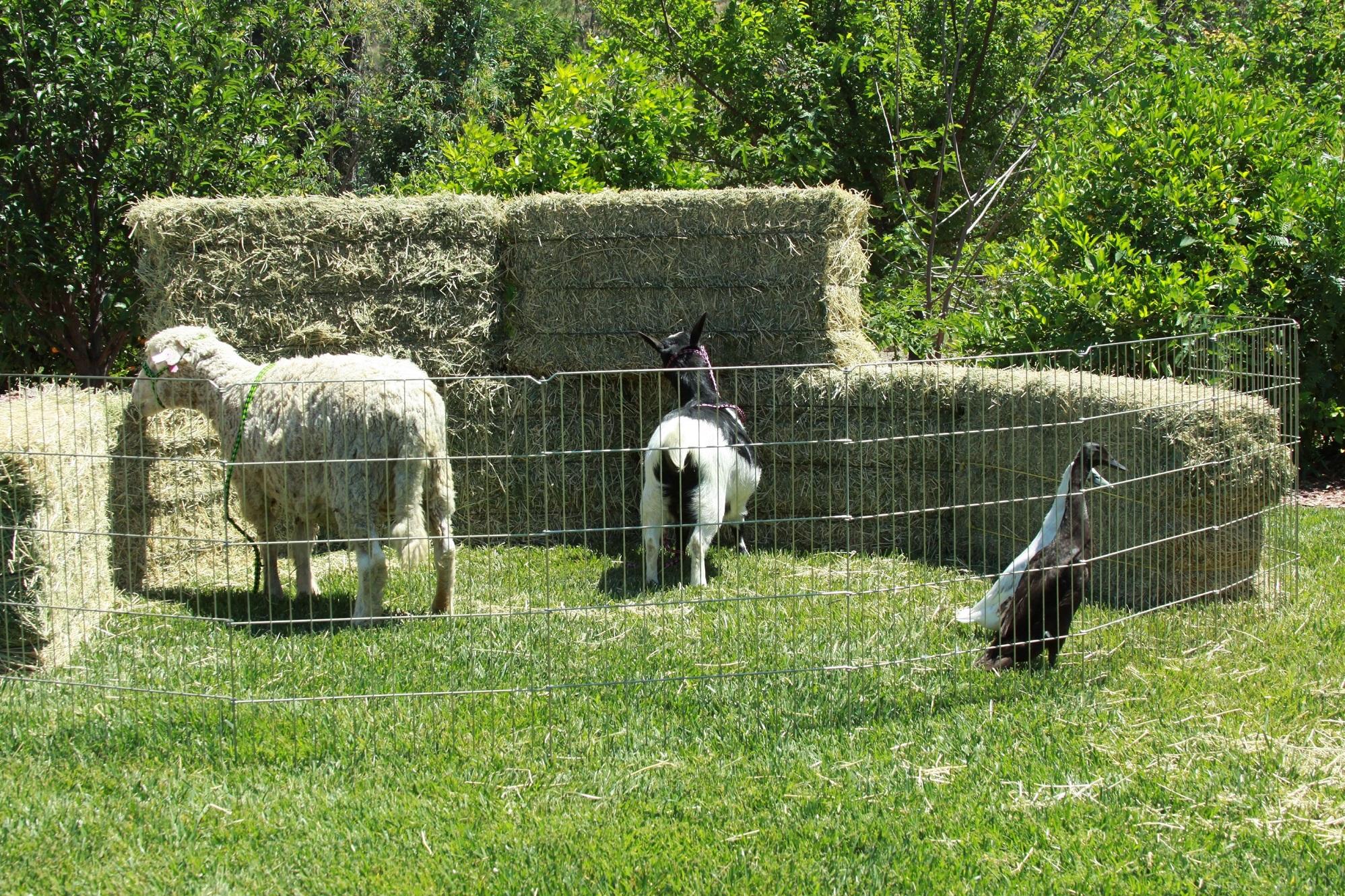 Bandy Canyon - Petting Zoo