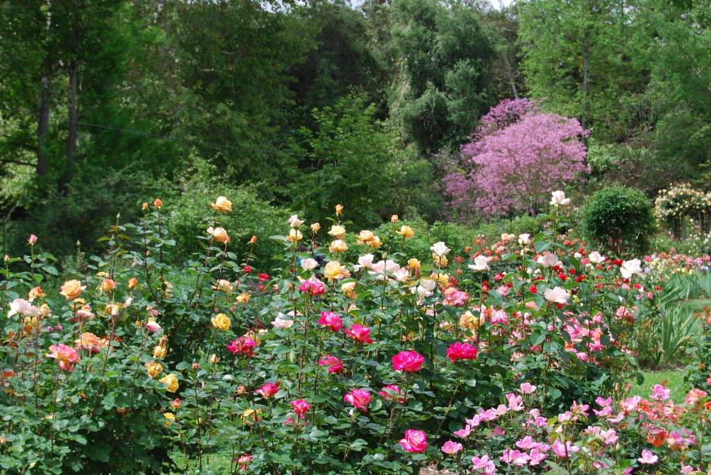 Descanso Gardens 1 (1)