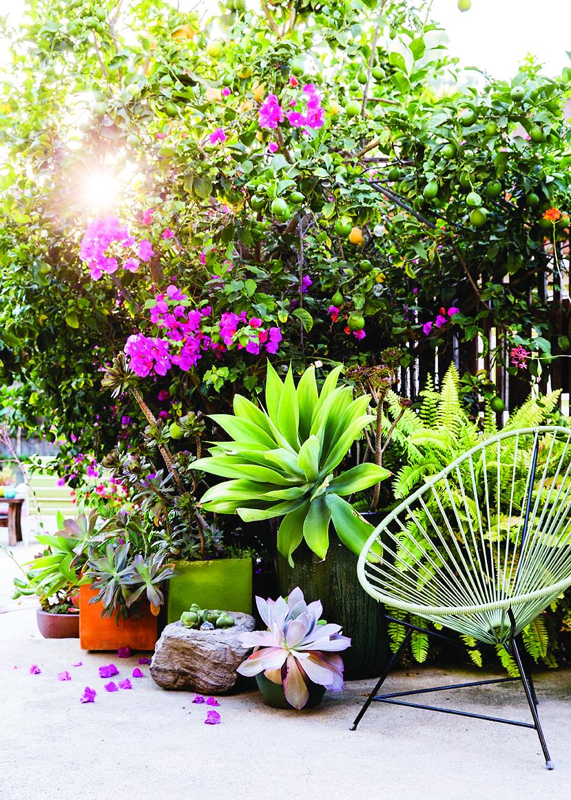 Sunset Magazine's New Gardens at Cornerstone in Sonoma