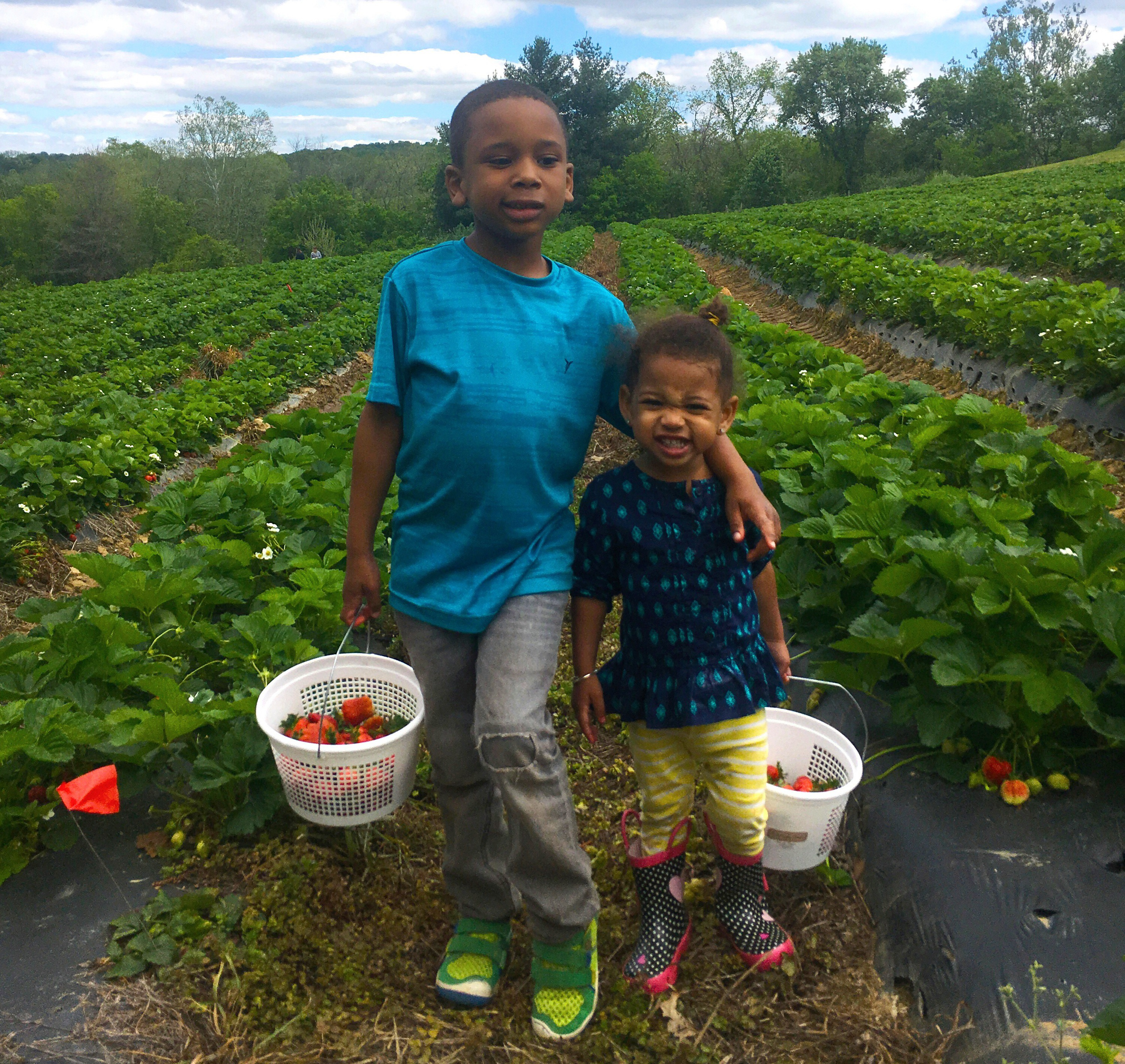 The Berry Best Pick Your Own Farms Around Dc